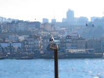 Рио Дуэро e перспектива sua Стоковое фото RF