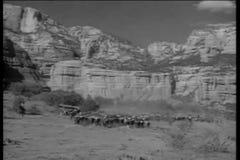 Рискованное предприятие ковбоев табуня скотин через каньон пустыни видеоматериал