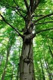 Рисовать на дереве Стоковая Фотография