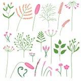 Рисовать установленный различных заводов и цветков Стоковая Фотография RF