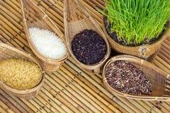 Рисовая посадка Стоковые Фотографии RF