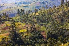 Рисовые поля в долине стоковое фото rf