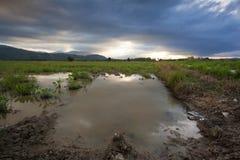Рисовые поля в заходе солнца с облаками муссона Стоковые Изображения
