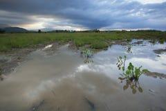 Рисовые поля в заходе солнца с облаками муссона Стоковая Фотография RF