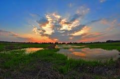 Рисовые поля в Langkap, Perak стоковые фото