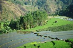 рисовые поля и древесины встают на сторону - мимо - сторона Стоковое Изображение RF