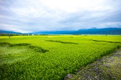 Рисовые поля Тайваня трассы 193 Стоковые Фотографии RF