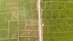 Рисовые поля Kota Belud стоковые изображения rf