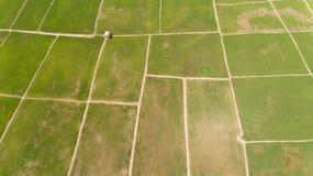 Рисовые поля Kota Belud стоковое фото rf