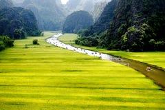 Рисовые поля вдоль потока на времени сбора. Стоковые Изображения