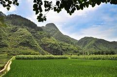 Рисовые поля в фарфоре Стоковые Фотографии RF