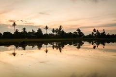 Рисовые поля в Bukit Mertajam Penang, Малайзии стоковые фотографии rf