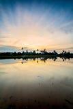 Рисовые поля в Bukit Mertajam Penang, Малайзии стоковая фотография rf