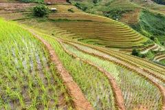 Рисовые поля в Mu Cang Chai Стоковое Фото