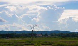 Рисовые поля, горы, небо мягкое и нерезкость Стоковое Изображение