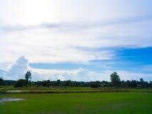 Рисовые поля, горы, небо мягкое и нерезкость Стоковое фото RF