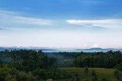 Рисовые поля, лес, океан и гора с голубым небом Стоковые Изображения RF