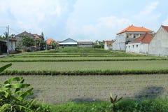Рисовые поля задворк Стоковые Изображения RF