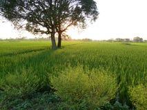 Рисовые поля непальца Стоковое Изображение