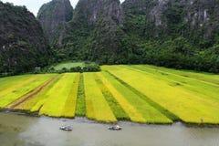 Рисовые поля осмотренные от пика moutain. Стоковые Изображения RF