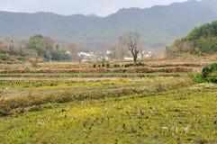 Рисовые поля страны Стоковое Фото