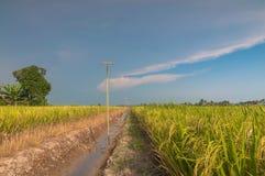 Рисовые поля с небом Стоковая Фотография RF