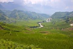 Рисовые поля Стоковые Изображения