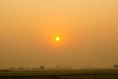 Рисовые поля Стоковые Изображения RF