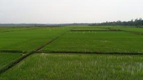 Рисовые поля стоковые фотографии rf