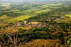Рисовые поля af земли стоковое фото rf