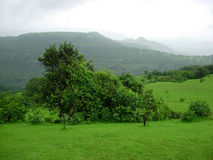 рисуночное сельской местности зеленое Стоковые Изображения RF