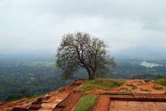 Рисуночный взгляд от верхнего дворца Sigiriya, Шри-Ланка Стоковые Фото