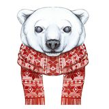 Рисующ с акварелью полярного медведя в методе шаржа, на теме Нового Года, рождество, в связанном шарфе Стоковая Фотография
