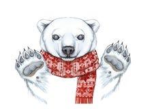 Рисующ с акварелью полярного медведя в методе шаржа, на теме Нового Года, рождество, в связанном шарфе Стоковые Фотографии RF