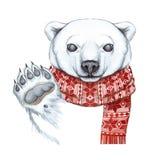 Рисующ с акварелью полярного медведя в методе шаржа, на теме Нового Года, рождество, в связанном шарфе Стоковое фото RF
