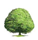 рисуя зеленый вал Стоковые Фотографии RF