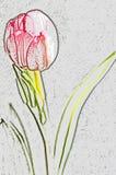 рисуя изолированный тюльпан Стоковое фото RF