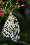 рис бабочки бумажный Стоковое фото RF
