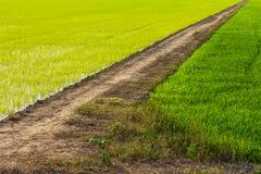 Рис бермов дороги предпосылки зеленый стоковая фотография