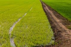 Рис бермов дороги предпосылки зеленый стоковые фото