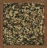 рис бленды коричневый одичалый Стоковое фото RF