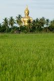 рис большой Будда фермы 3 золотистый Стоковое Изображение
