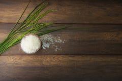 рис жасмина Стоковое Изображение