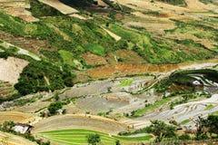 Рис засаживая сезон Стоковые Изображения RF