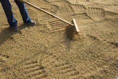рис засыхания Стоковая Фотография RF
