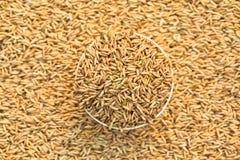 рис зерна шара Стоковое Фото