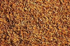 рис зерна Стоковая Фотография RF