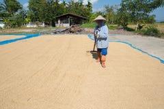 Рис и грабл засыхания стоковые фото