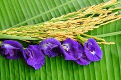 Рис и лиловый цветок на зеленых листьях Стоковое Фото