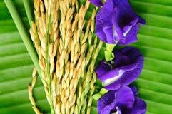 Рис и лиловый цветок на зеленых листьях Стоковые Фотографии RF